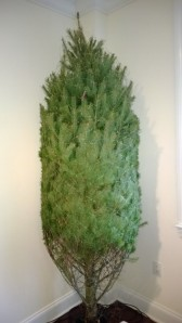 Christmas tree in Great NEck (c) Willow-Townsend Productions